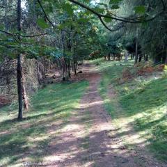 Prasečí stezka